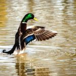 duck-2140705_960_720-boost